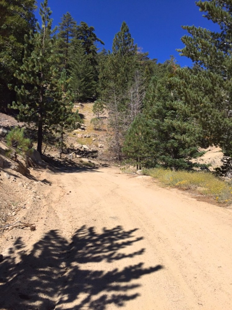 Jeep trail up to Waterman